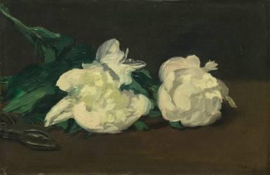 Branche de pivoines blanches et sécateur (Edouard Manet) - Muzeo.com