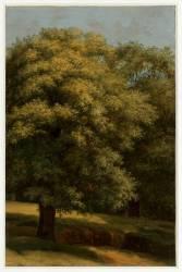 Le grand arbre (Valenciennes Pierre Henri de) - Muzeo.com