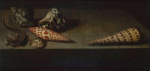 Lézard et coquillages (Van der Ast Balthasar) - Muzeo.com