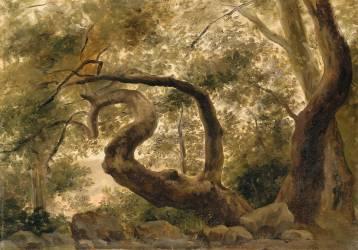Sous-bois, arbres aux branches tortueuses (Pierre Henri de Valenciennes) - Muzeo.com