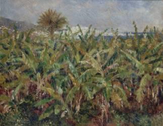 Champ de bananiers (Renoir Auguste) - Muzeo.com