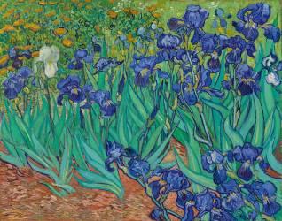 Iris (Van Gogh Vincent) - Muzeo.com
