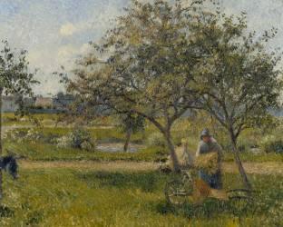 La brouette, verger (Pissarro Camille) - Muzeo.com