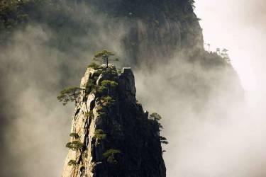 Asia, China, Anhui, Huangshan mountains, Huangshan pine, Pinus hwangshanensis, winter (Lukasseck Frank) - Muzeo.com