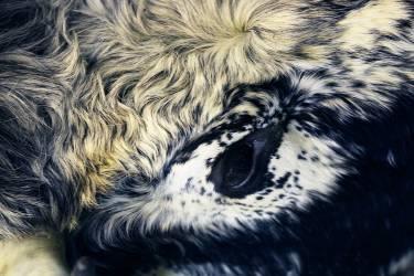 Bestiaire VIII (Sandrine Elberg) - Muzeo.com