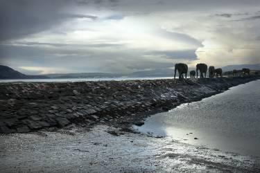 Eléphants marchant sur la chaussée (Logan George) - Muzeo.com