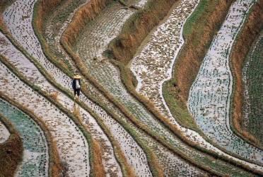China - Guangxi - Ricefield (Alessandra Meniconzi) - Muzeo.com