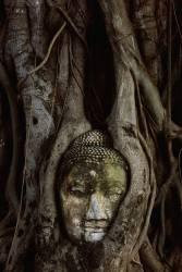 Buddha Head in banyan tree roots at Wat Mahathat (Ehrs Bruno) - Muzeo.com