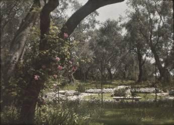 Beaulieu, villa Salles, roseraie (anonyme) - Muzeo.com