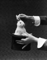 Mains de magicien sortant un lapin d'un chapeau (Armstrong Roberts H.) - Muzeo.com