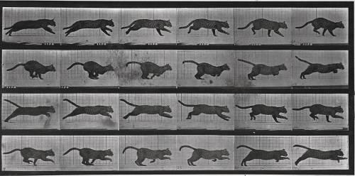 Album sur la décomposition du mouvement: chat (Muybridge Eadweard) - Muzeo.com