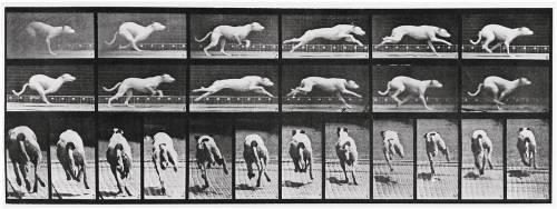 Album sur la décomposition du mouvement, Animal Locomotion: chien (Muybridge Eadweard) - Muzeo.com