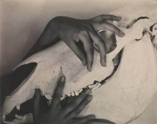 Georgia O'Keeffe — Hands and Horse Skull (Alfred Stieglitz) - Muzeo.com
