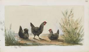 Carnet : trois poules dans la campagne (Léon Bonnat) - Muzeo.com