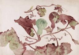 Courge et guêpes (Emile Gallé) - Muzeo.com