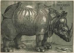 Le Rhinocéros (Dürer Albrecht) - Muzeo.com