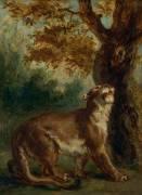 Le Puma, dit aussi Lionne guettant une proie (Delacroix Eugène) - Muzeo.com