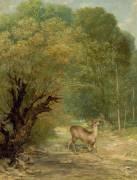 Le chevreuil chassé aux écoutes, le printemps (Courbet Gustave) - Muzeo.com