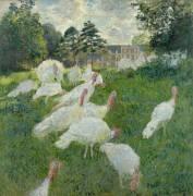 Les dindons (Claude Monet) - Muzeo.com