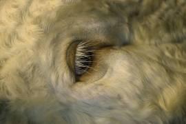 Bestiaire VI (Elberg Sandrine) - Muzeo.com