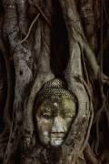 Buddha Head in banyan tree roots at Wat Mahathat (Bruno Ehrs) - Muzeo.com