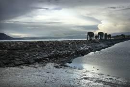 Eléphants marchant sur la chaussée (George Logan) - Muzeo.com