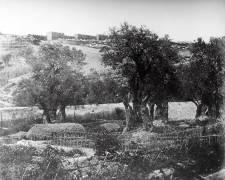 Gethsemane (Felice Beato) - Muzeo.com